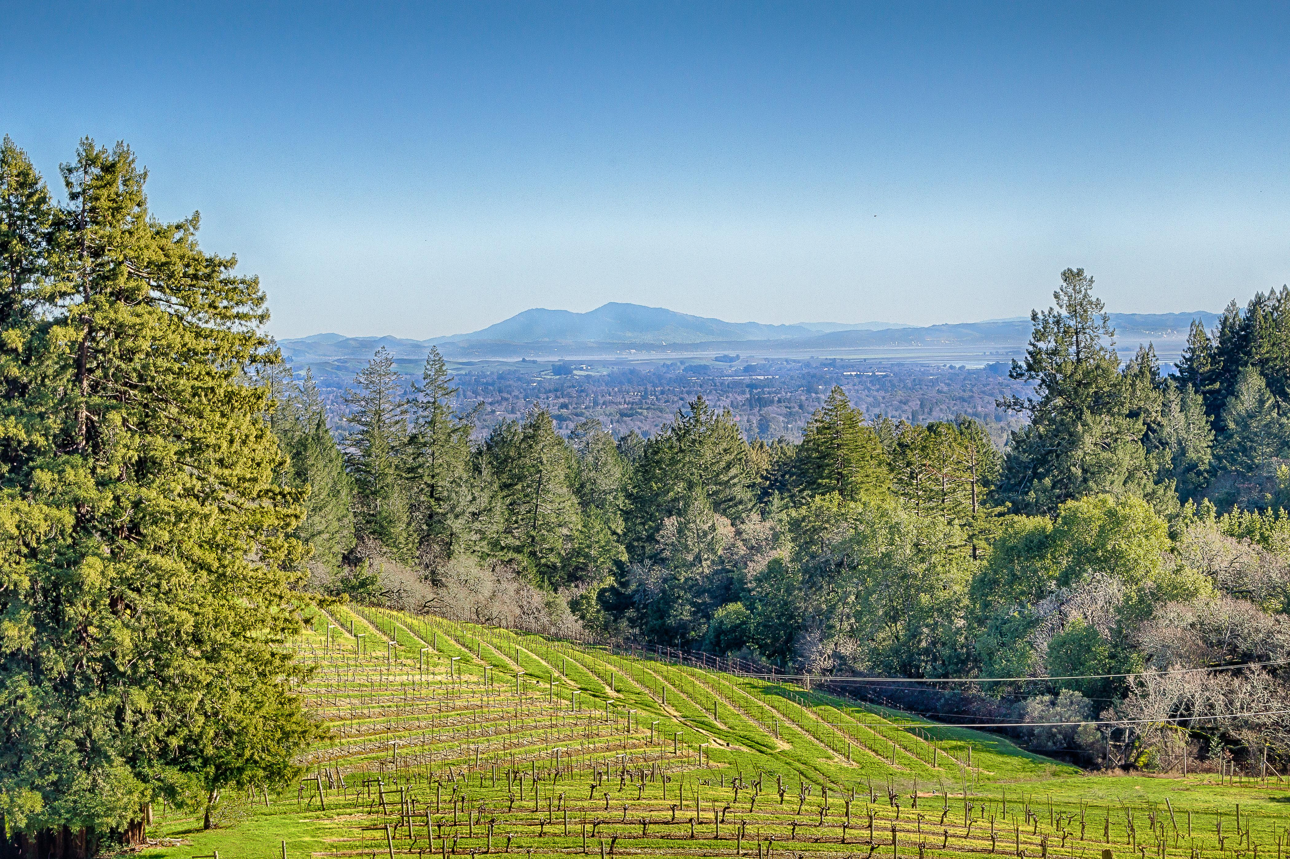 Walk down the road to take in stunning views of Sonoma.