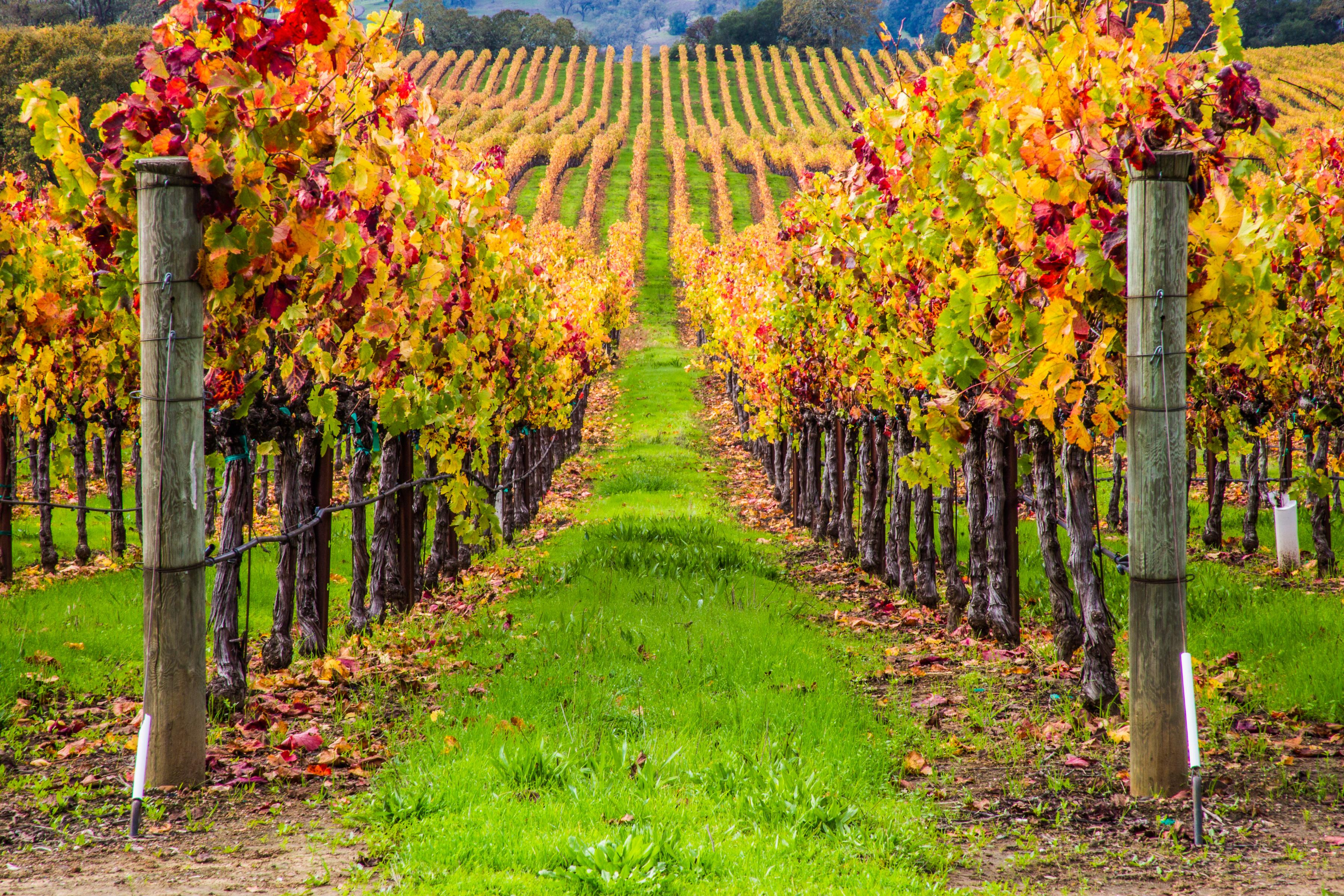Tour the breathtaking grounds of Scoggins Wines 4 miles away.