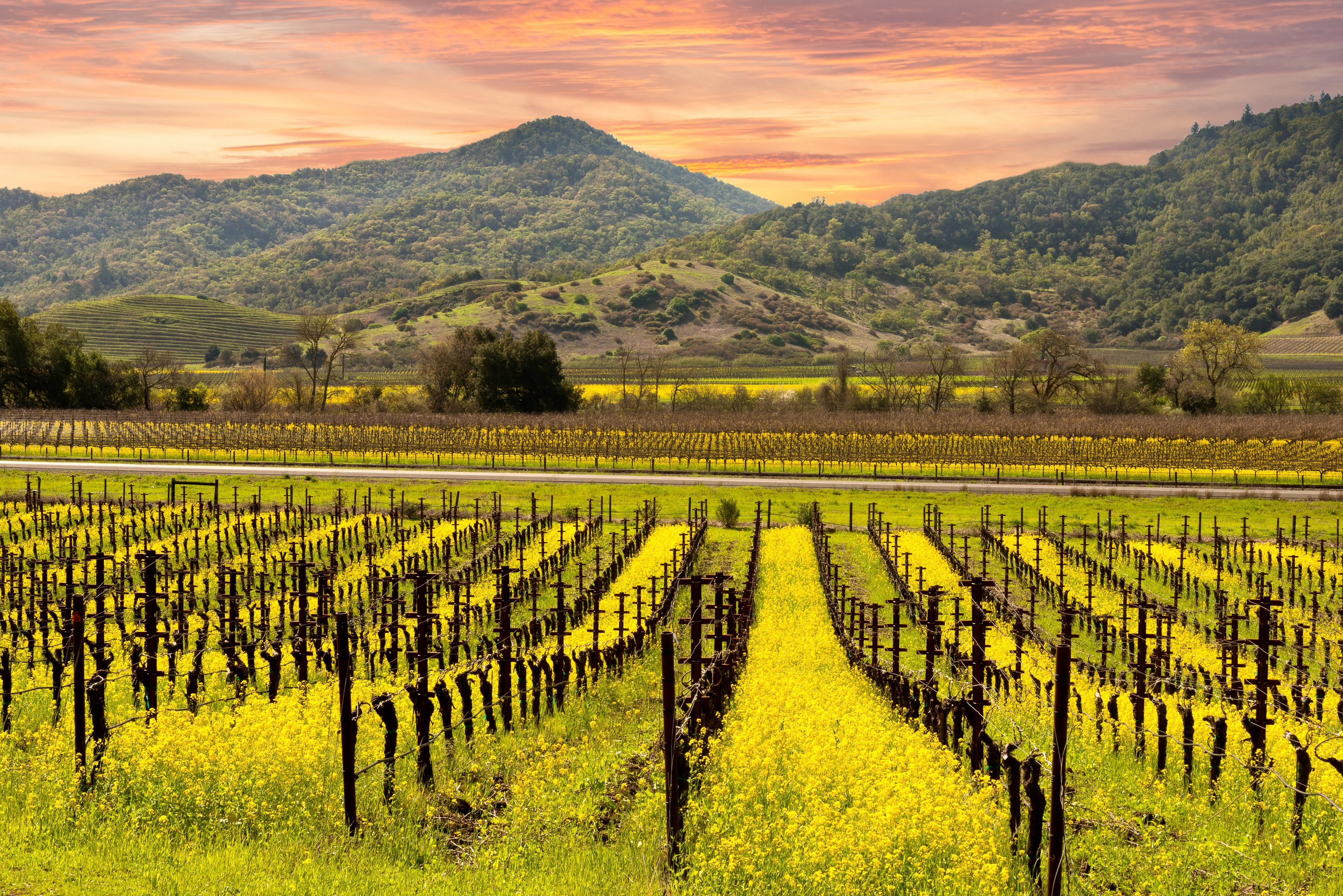 Enjoy the unsurpassed beauty of Sonoma wine country.