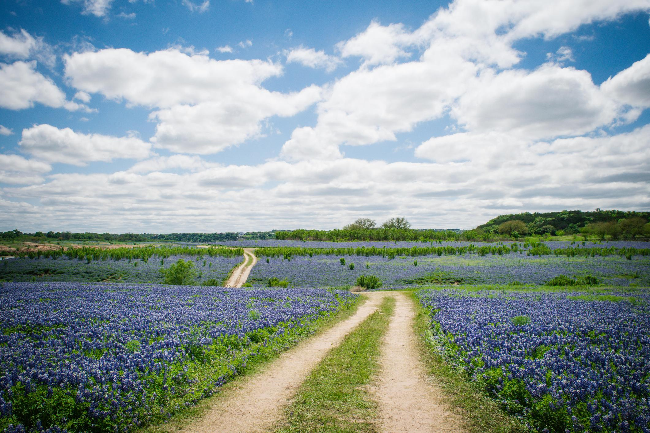 Take in the scenic views of Texas Hill Country.
