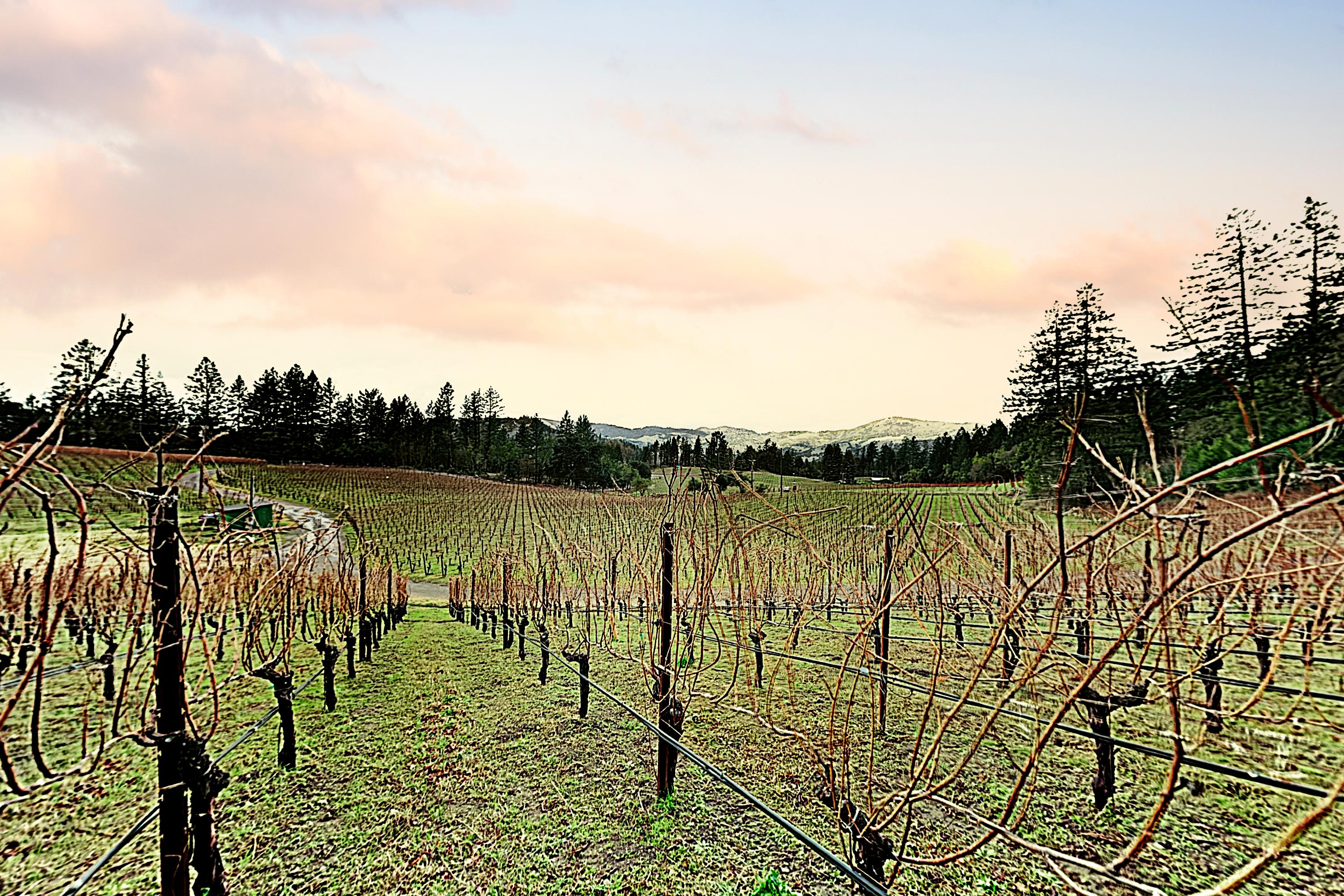 Enjoy lovely Wine Country views of the vineyard across the street.