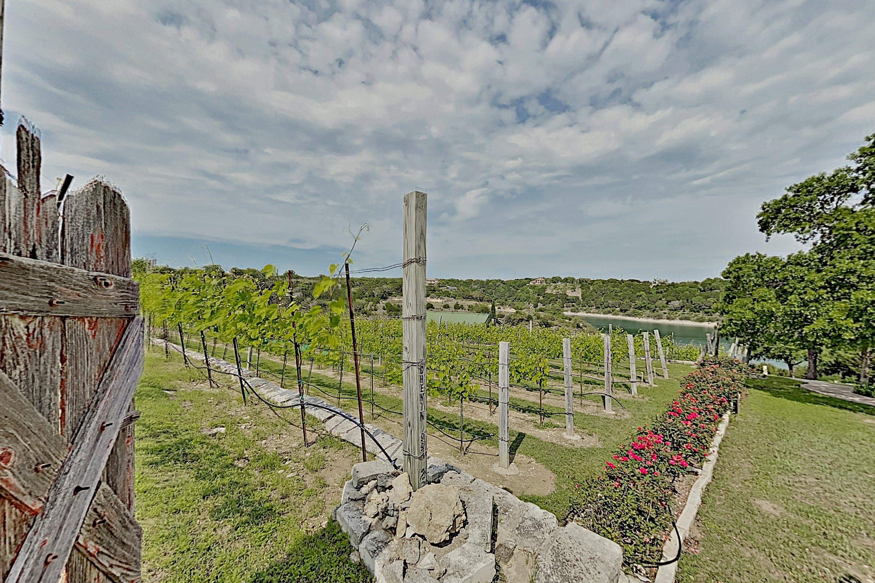 Take a walk and tour the vineyards that surround the property grounds.